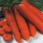 Carrot Autumn King 2 - Flakkee 2 - 50 grams - Bulk Discounts available